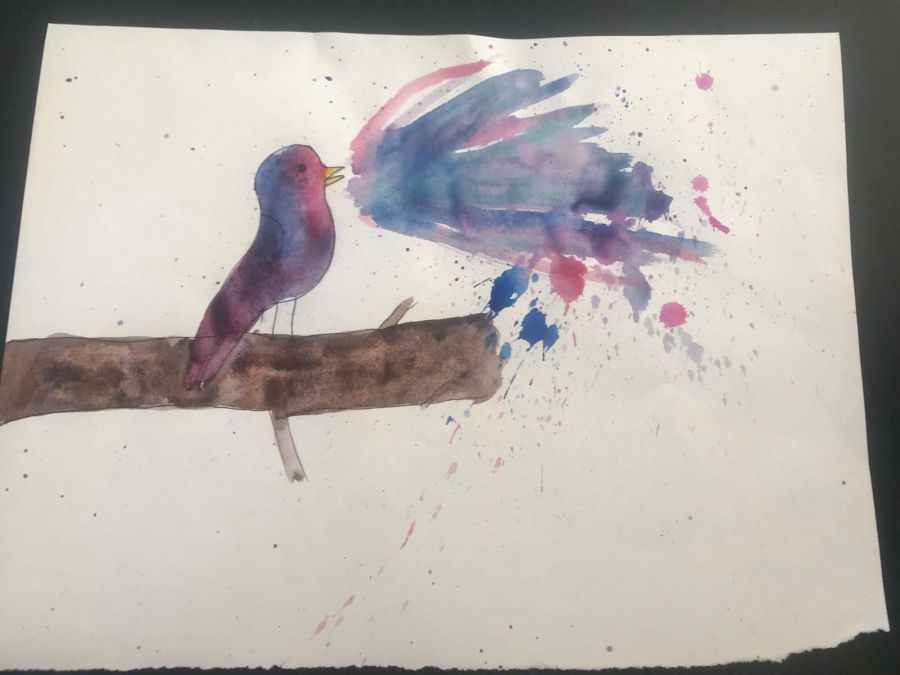 Ridge-DR-Birds